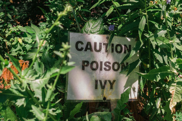 How to Safely Kill Poison Ivy, Poison Oak, and Poison Sumac