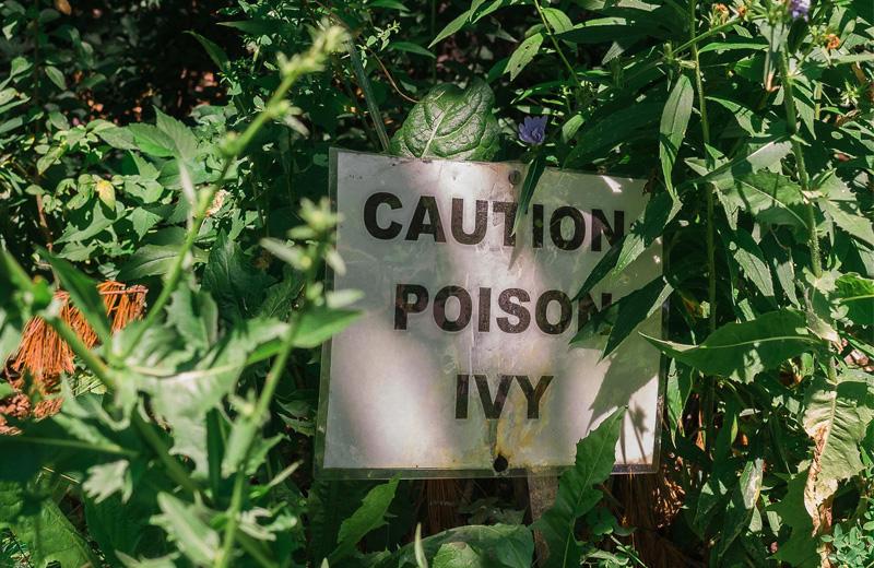 caution poison ivy