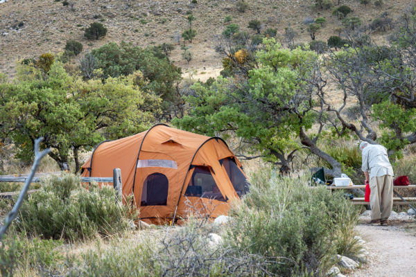 Plants To Avoid When Camping and Hiking