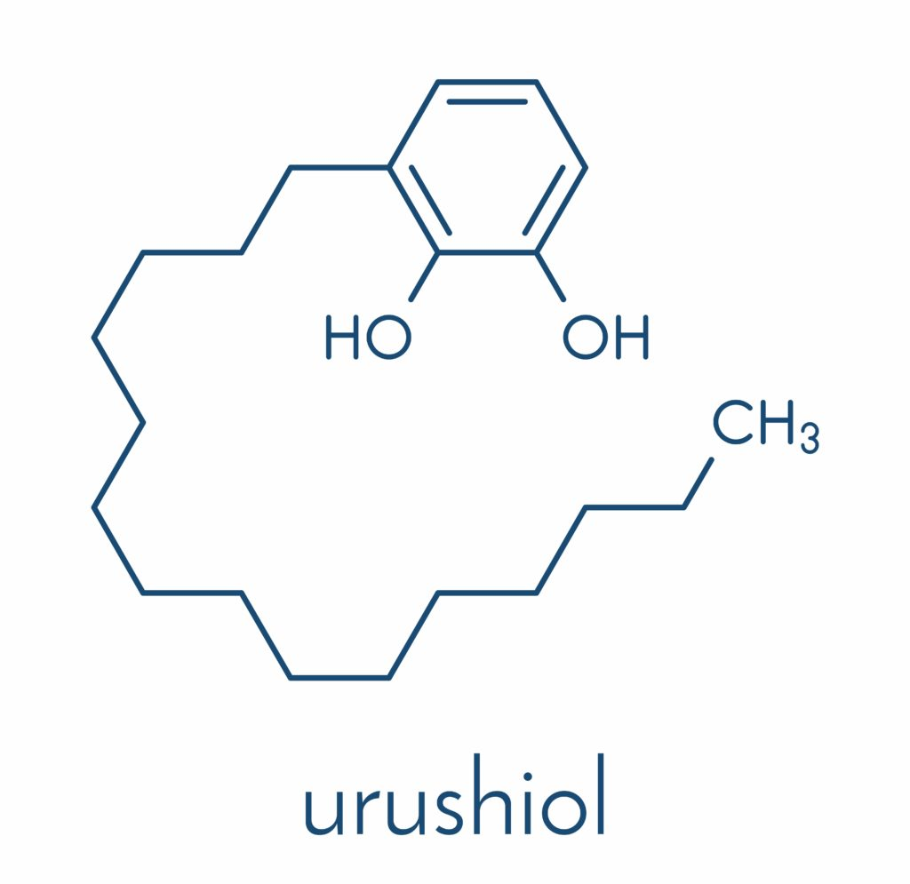 what is urushiol