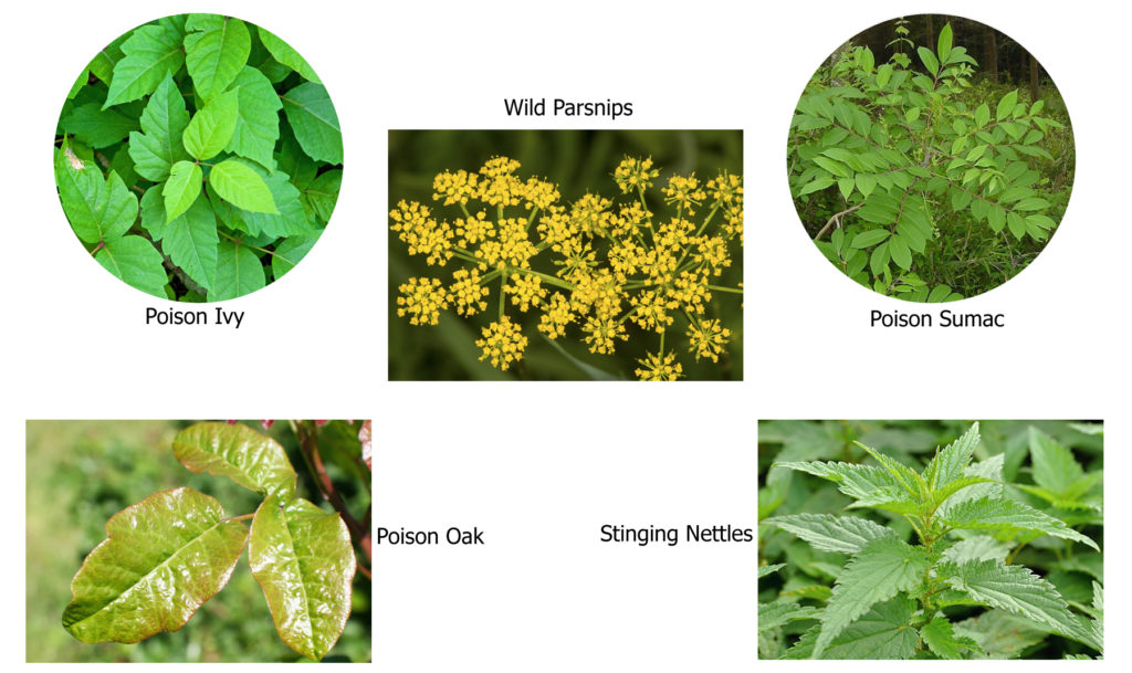 Poisonous Plants to Avoid in Summer